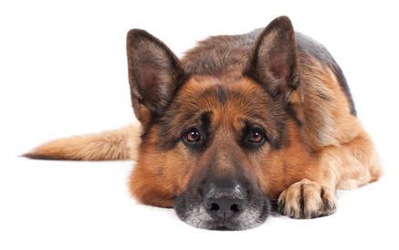 Hundehaftpflicht Darmstadt