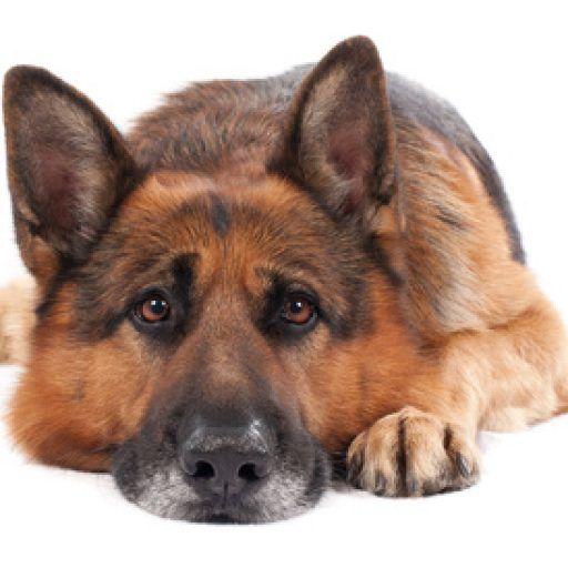 hundehaftpflicht harz4