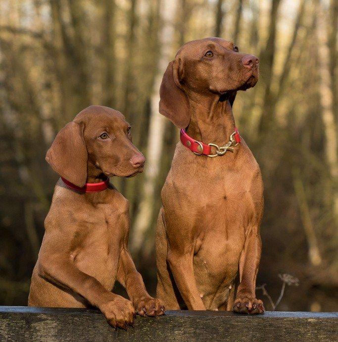 guenstige hundeversicherung