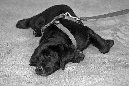hundehaftpflicht hundeschule