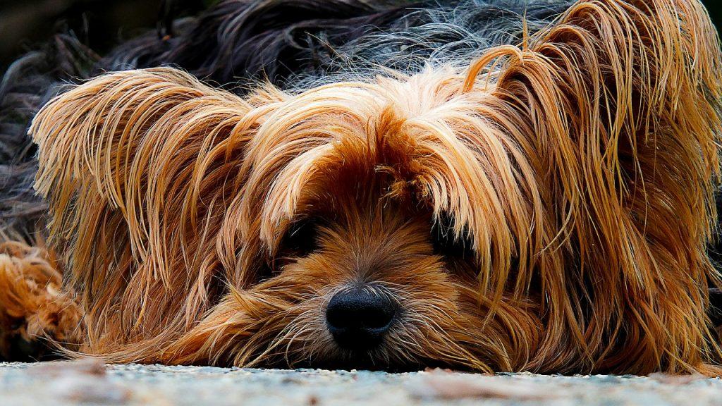Hundehaftpflicht Vergleich