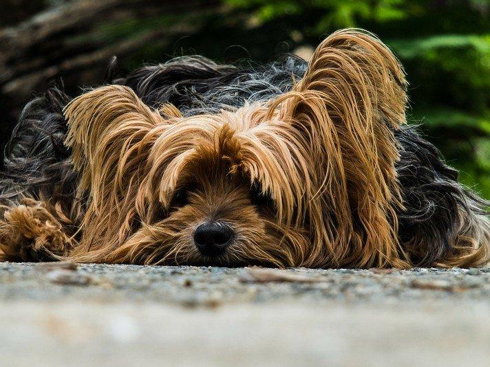 Warum ein Hundehaftpflicht vergleich ?
