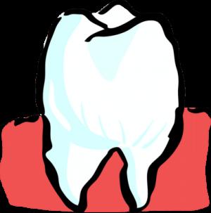 Zahnschmerzen beim Hund