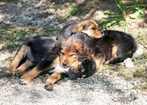 Hunde verschenken