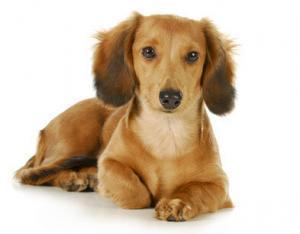 hundehaftpflicht ideal