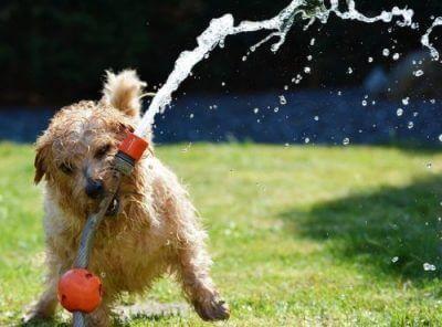 Hundehaftpflicht ohne Selbstbeteiligung