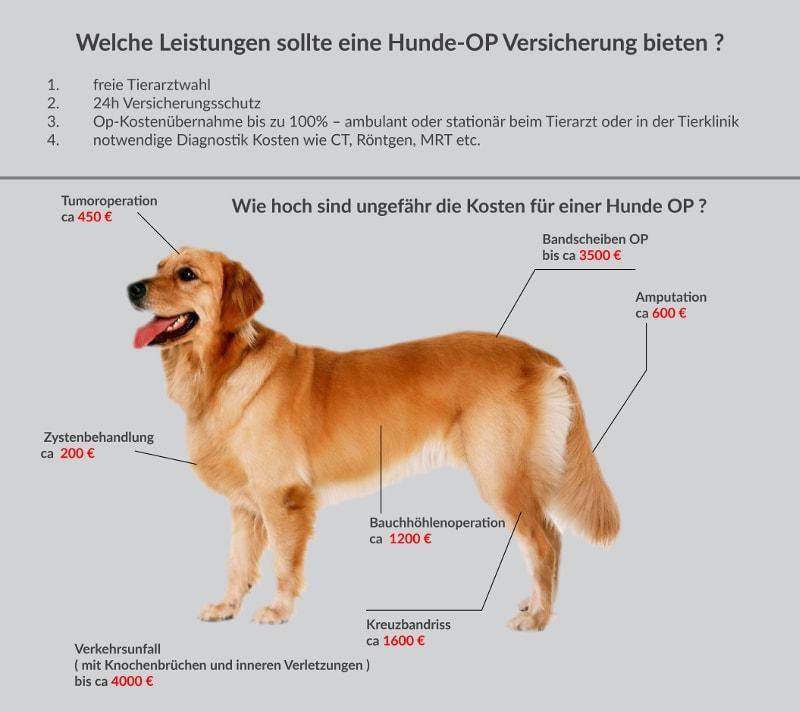 Für was sollte eine Hunde Op Versicherung Leisten ?