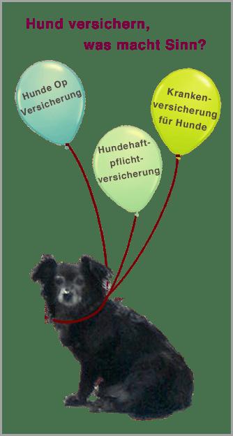 Welche Hundeversicherung macht Sinn ?