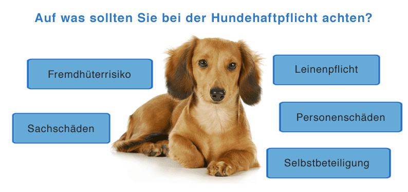 Auf was sollten Sie bei einer Hundehaftpflicht achten ?