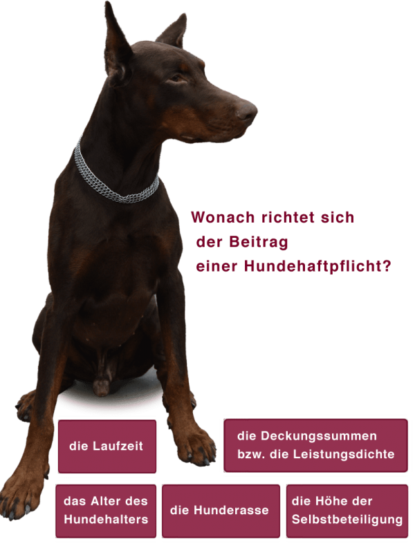 Hundehaftpflicht Beitragshöhe