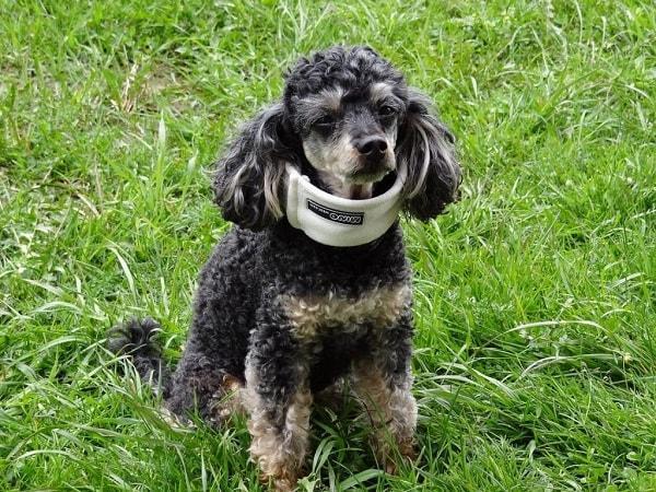 Hundehaftpflicht und Hundekrankenversicherung